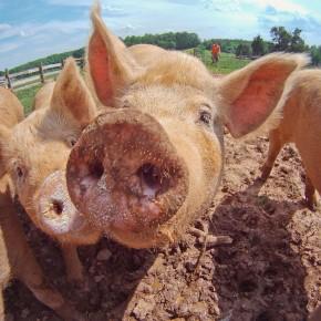 Taiwan This Week: The politics of pork